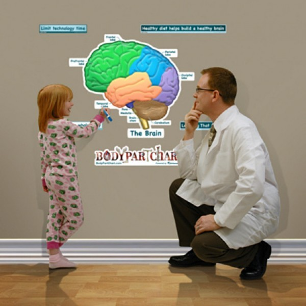 poster hersenen anatomie