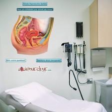 Poster Anatomie Vrouwelijk Geslachtsorgaan