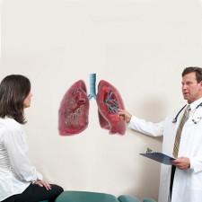 Poster anatomie longen copd astma luchtwegen